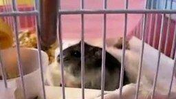 Устрашающий грызун смотреть видео прикол - 0:32