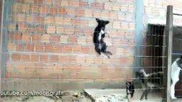 Маленький пёс-шпион смотреть видео прикол - 0:35