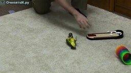 Смотреть 20 трюков от попугая за 2 минуты