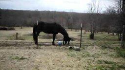 Смотреть Игривая дружба лошади и собаки
