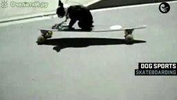 Смотреть Собаки скейтбордисты