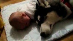 Собачья колыбельная малышу смотреть видео прикол - 0:44