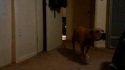 Охотник за мягкими игрушками смотреть видео прикол - 1:05
