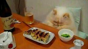 Кошачья трапеза смотреть видео прикол - 1:04