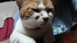 Кот говорящий по японски смотреть видео прикол - 1:26