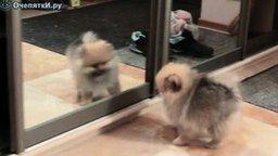 Смотреть С разбегу в зеркало