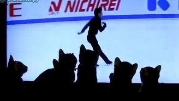 Смотреть Шесть котят у телевизора