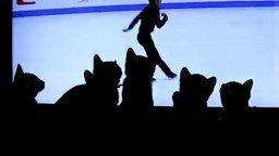 Шесть котят у телевизора