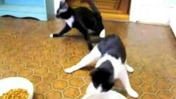 Шальные котяры смотреть видео прикол - 0:49