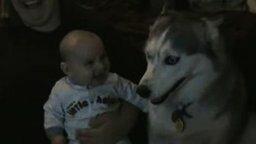 Пёс поёт для малыша смотреть видео прикол - 0:52