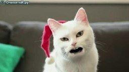 Смотреть Рождественская песенка от кота