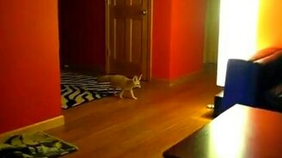 Смотреть Бешеный лисёнок