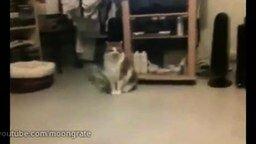 Кот и вертолёт смотреть видео прикол - 0:31