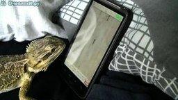 Смотреть Ящерица и айфон