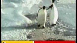 Пингвин-предатель смотреть видео прикол - 0:03