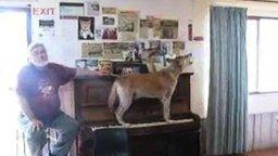 Смотреть Собака играет и поёт
