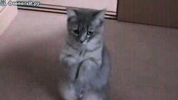 Котя попрошайка смотреть видео прикол - 0:20
