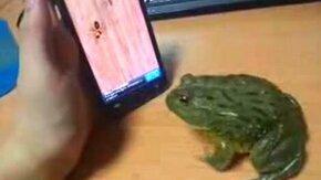 Лакомство для лягушки смотреть видео прикол - 0:27