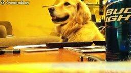 Смотреть Пёс - фанат гитары