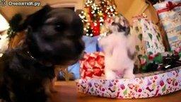 Смотреть Щенята распаковывают рождественские подарки