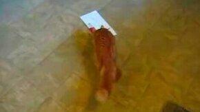 Кошка атакует открытку смотреть видео прикол - 0:35