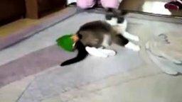 Смотреть Попугай одолевает кошку