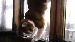 Смотреть Кот акробат за окном