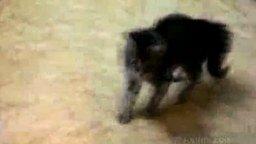 Танцы котёнка смотреть видео прикол - 1:06