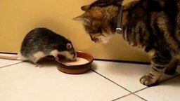 Смотреть Хитроумная крыска