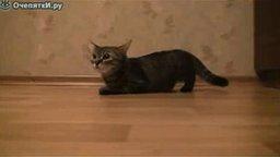 Смотреть Командует кошкой
