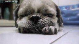 Смотреть Как засыпают щенки