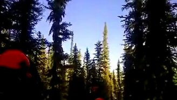 Смотреть Страшно в лесу?