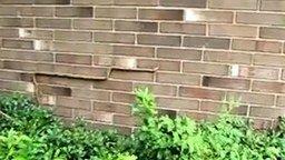 Змея ползёт по стене смотреть видео прикол - 2:20