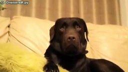 Смотреть Собака корчит рожи