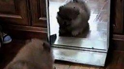 Лающий щенок и зеркало смотреть видео прикол - 0:36