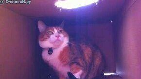 Смотреть Это моя коробка!