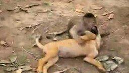 Смотреть Обезьянка и щенок