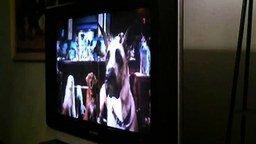 Смотреть Пёс смотрит сериал