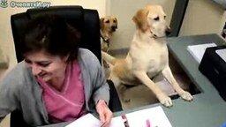 Офисный помощник смотреть видео прикол - 0:45