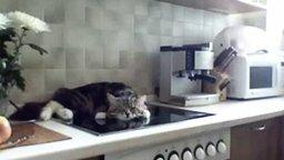 Наглец котяра смотреть видео прикол - 0:51