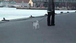 Так выгуливают собак в Дании смотреть видео прикол - 1:17