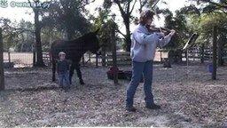 Осёл и скрипка смотреть видео прикол - 0:47