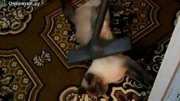 Массаж пылесосом для кота смотреть видео прикол - 0:42