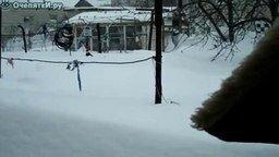 Смотреть Чёрный кот и белый снег