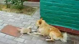 Смотреть Раздражительный котёнок