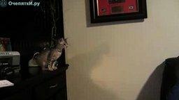 Смотреть Неудача котёнка в прыжке