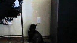 Кот и лазер смотреть видео прикол - 0:38