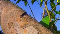 Смотреть Летающие змея и ящерица