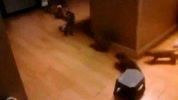 Опасная свора собак смотреть видео прикол - 1:02