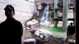 Неожиданность от обезьянки смотреть видео прикол - 0:33